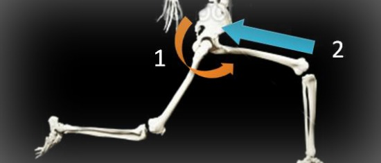The Hip Bone's Connected to the… Elbow?