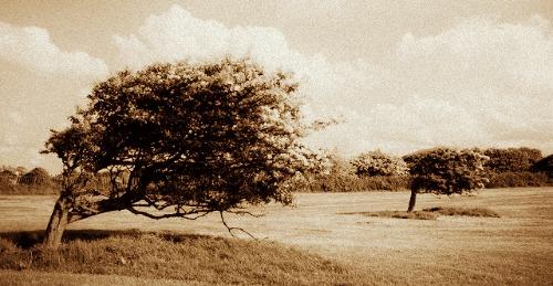 tree-wind-BP
